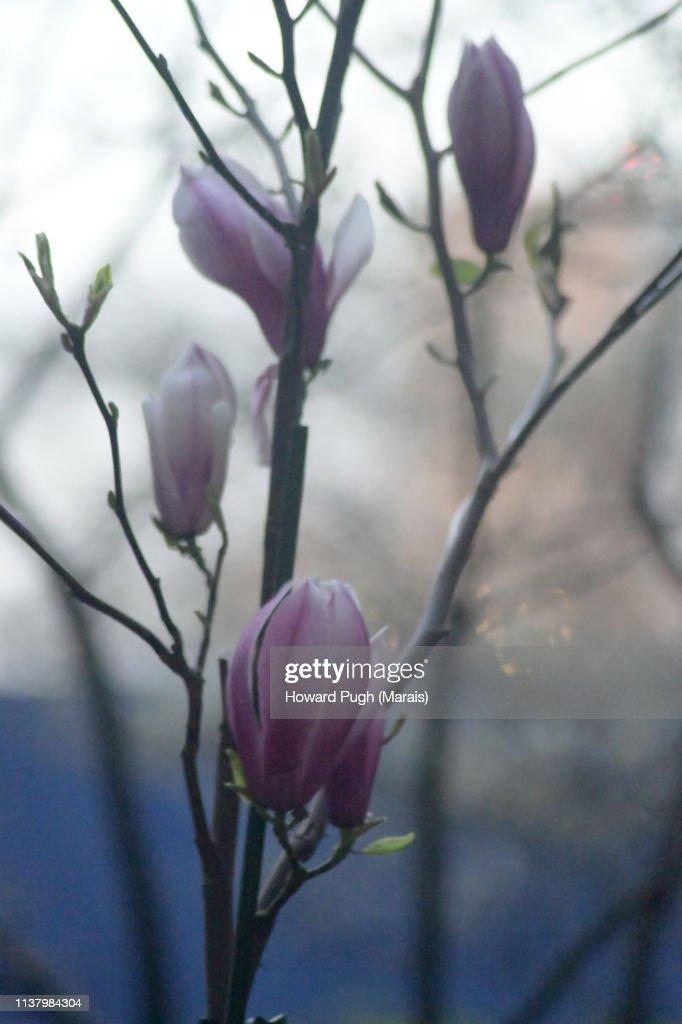 Twilight Spring Cultivated Floral Landscape : Stock-Foto