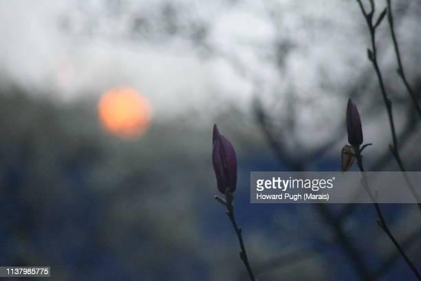 Twilight Spring Cultivated Floral Landscape