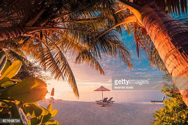 Twilight summer beach landscape with sun beds and palm trees. Beautiful amazing Maldives beach sunset paradise.