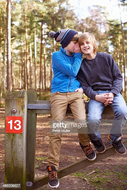 twin brothers sitting and whispering on gate in forest - alleen jongens stockfoto's en -beelden