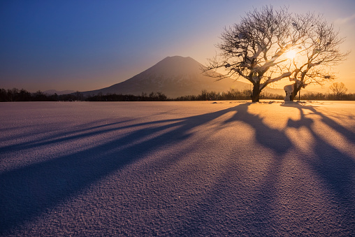 Twin cherry trees and Mt Yotei, Hokkaido, Japan - gettyimageskorea
