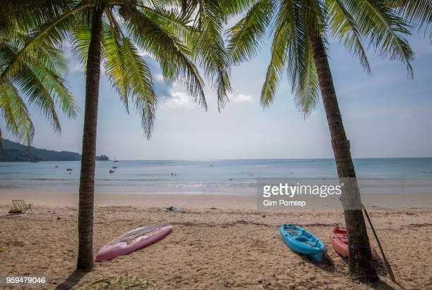 Twin coconut trees in Phuket beach , Phuket , Thailand