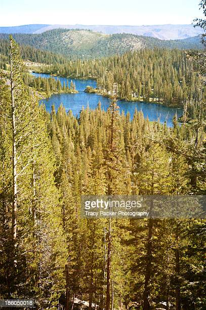 Twin Lakes seen over the conifers of Mammoth Lake