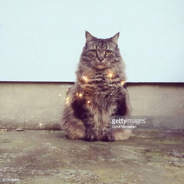 Twinkling Cat