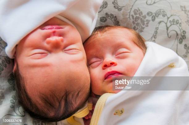 twins at 1 month - barr stock pictures, royalty-free photos & images