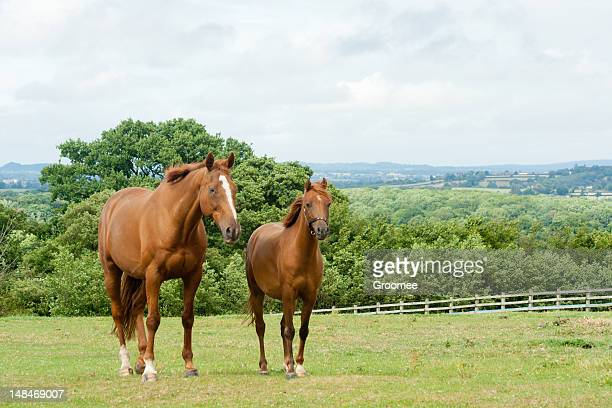 twins! - paddock stock photos and pictures