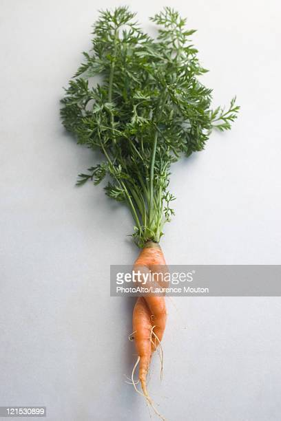 Twisted carrot