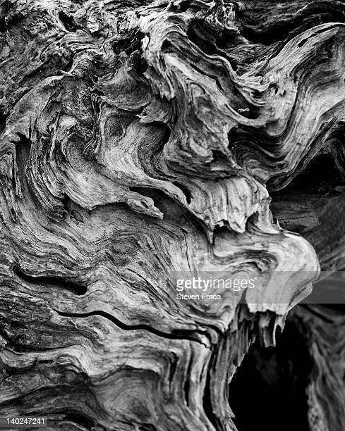Twisted piece of driftwood, close-up