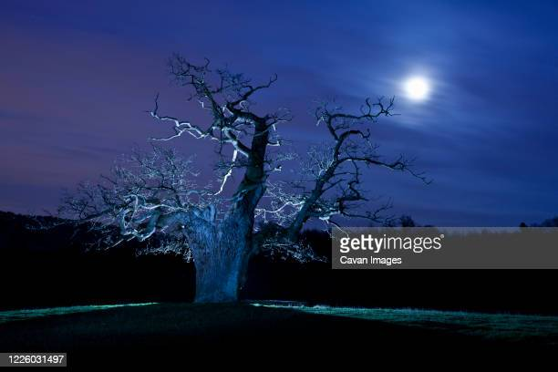 twisted tree lit up at night in surrey / england - blue stock pictures, royalty-free photos & images