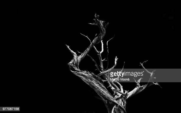 twisted tree - tree roots stock pictures, royalty-free photos & images