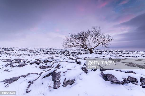 twistleton scar end in snow, ingleton, yorkshire dales, yorkshire, england, united kingdom, europe - limestone pavement stock pictures, royalty-free photos & images