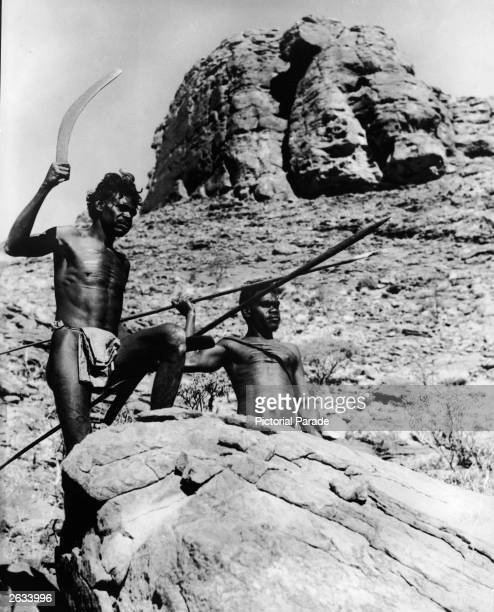 Two Aborigine men stand outdoors in a hunting pose holding a boomerang and wooden spears Australia 1950s