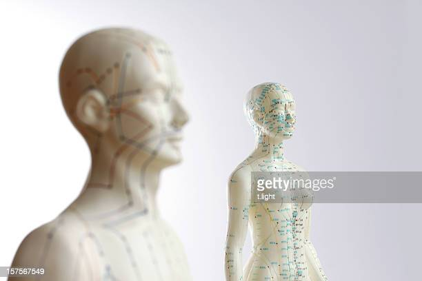 two acupuncture models - focus on female - pressure point stock photos and pictures