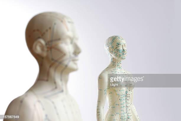 2 akupunktur-modelle-fokus auf weibliche - druckpunkt stock-fotos und bilder