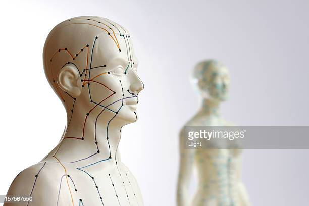 Two acupuncture models - Focus on male