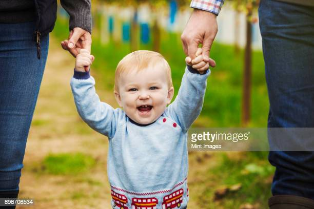Two adults and a baby boy holding hands in a polytunnel at a fruit farm.