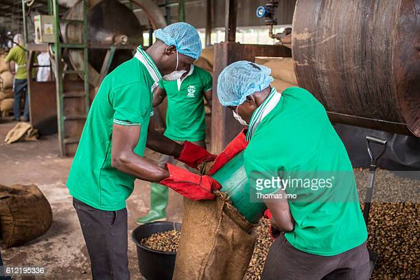 Two African workers of the MIM cashew processing company fill Cashew Nuts in sacks on September 07 2016 in Mim Ghana