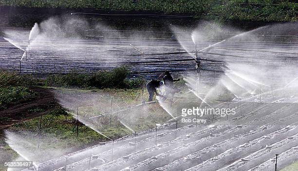 Two agricultural workers struggle with sprinkers in high winds blowing down the Santa Rosa Valley at Santa Rosa Rd and East Las Posas Rd