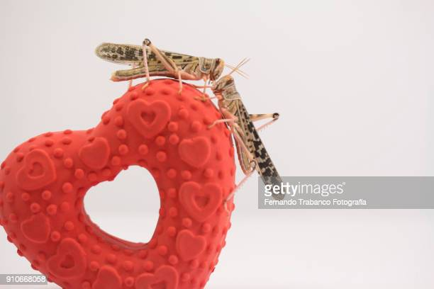 two animals in love - animal internal organ stock photos and pictures