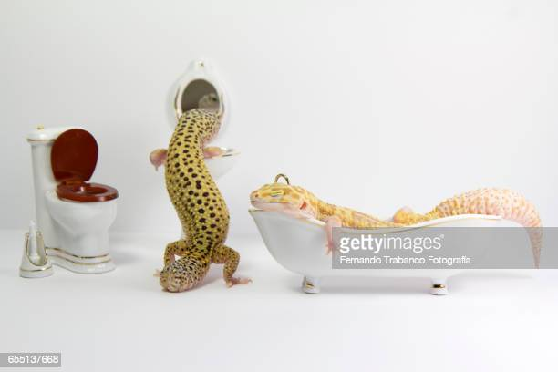 Two animals in the bathroom looking in the mirror and bathing in the bathtub