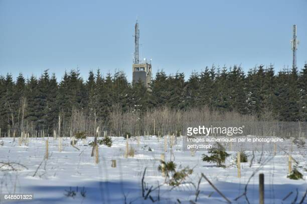 Two antennas emerging coniferous tree area