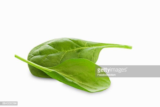 Two Baby Spinach Leaves on a White Background