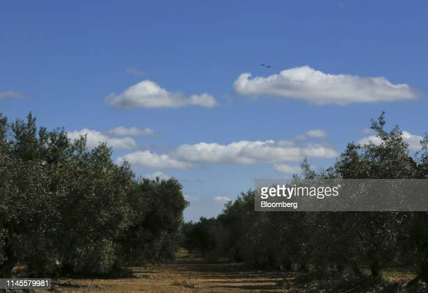 Two BAE Systems Plc 'Typhoon' Eurofighter military jets fly over an olive grove after taking off from the Moron Air Base in Arahal Spain on Wednesday...