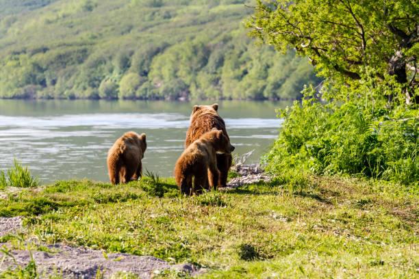 Two bears play with teddy bear
