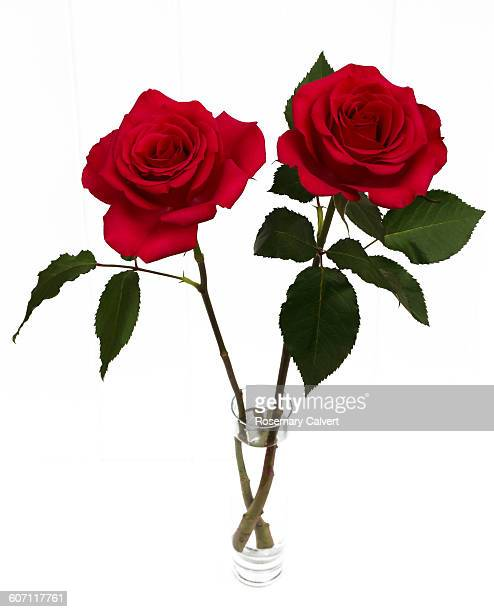 Two beautiful red roses in a vase together