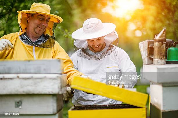 Zwei Imker, die die bienenwabe Ein Bienenstock