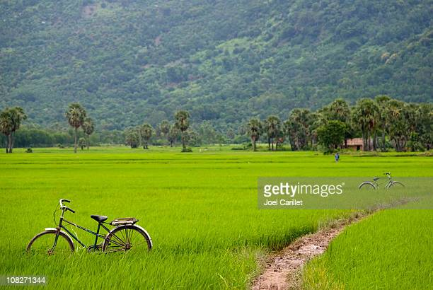 Bicycles and muddy path through rice field in Vietnam
