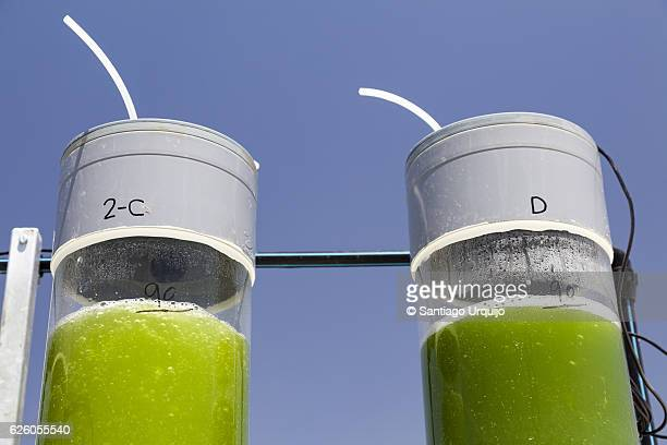 Two bioreactors filled with green algae fixing CO2