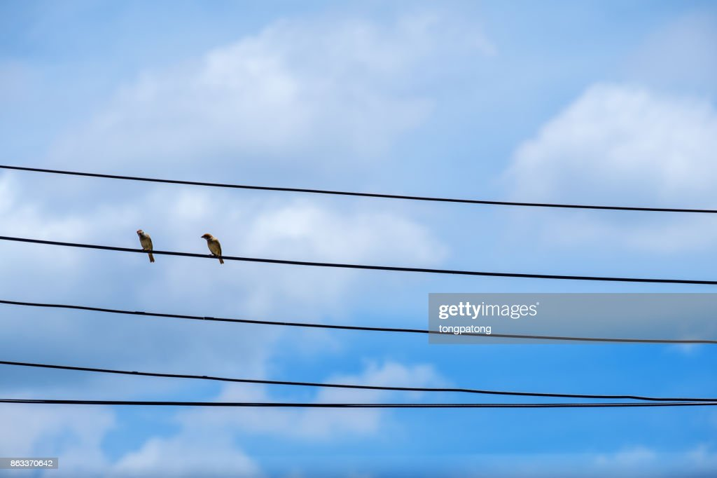 Two Bird On Cable Electric Line Bird Standing Perched On A Wire ...