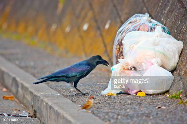 two birds, crow and sparrow - crow stock photos and pictures