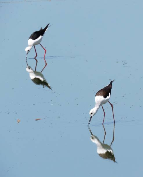 Two birds drinking water