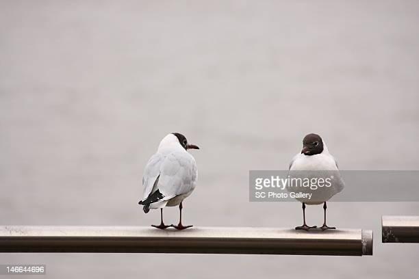 Two birds.