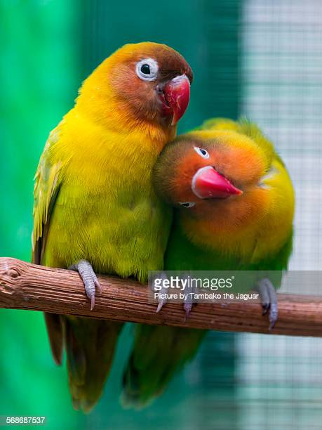 Two birds showing love