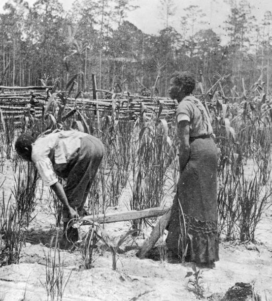 Two Black Slaves use a Primitive Style Plough for Rice...