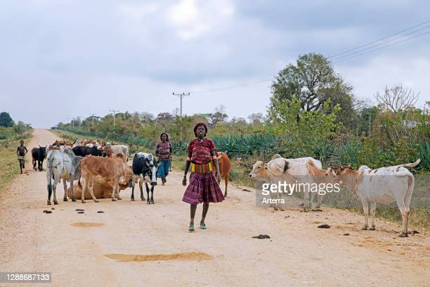 Two black women of the Banna / Banya tribe herding cattle along dirt road in the Lower Omo Valley, Debub Omo Zone, Southern Ethiopia, Africa.