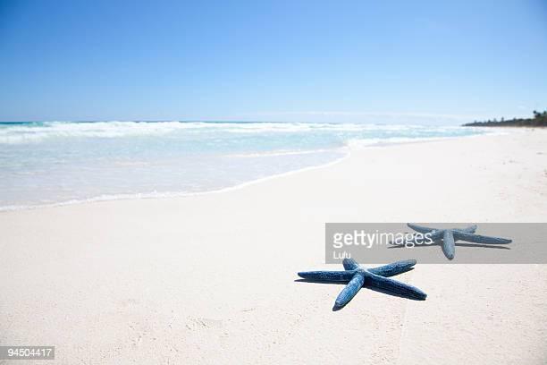 Two blue starfish on tropical beach