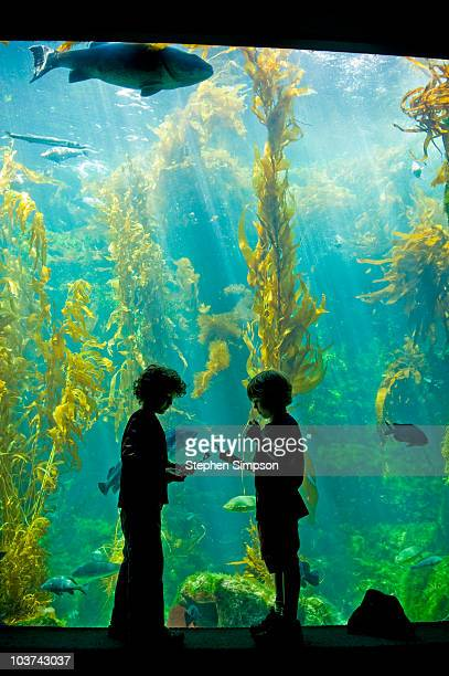 two boys [5] taking notes at an aquarium