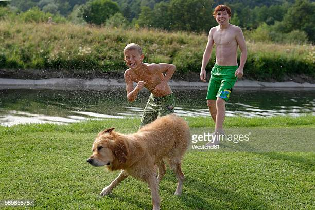 Two boys and a Golden Retriever after bathing