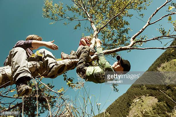 Two boys climbing on tree