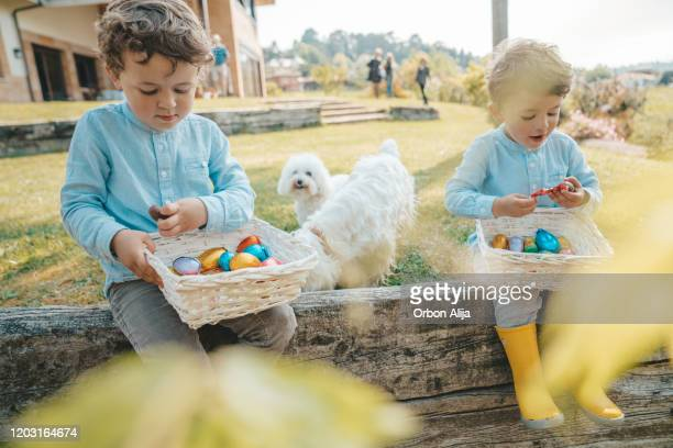 two boys eating chocolate easter eggs - dog easter stock pictures, royalty-free photos & images