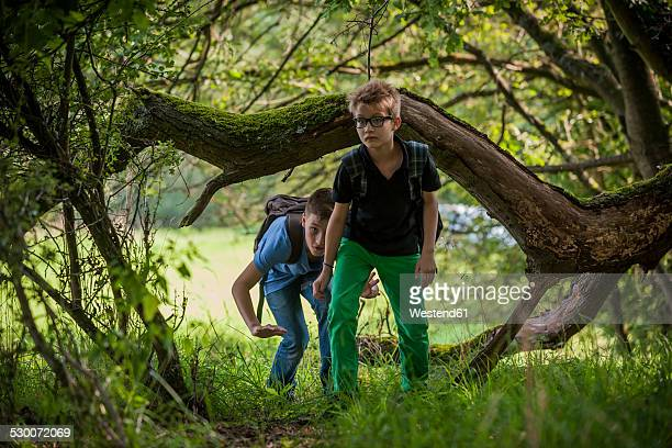 Two boys exploring a forest