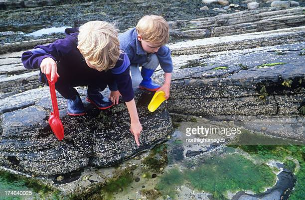 two boys exploring rockpools - limpet stock photos and pictures