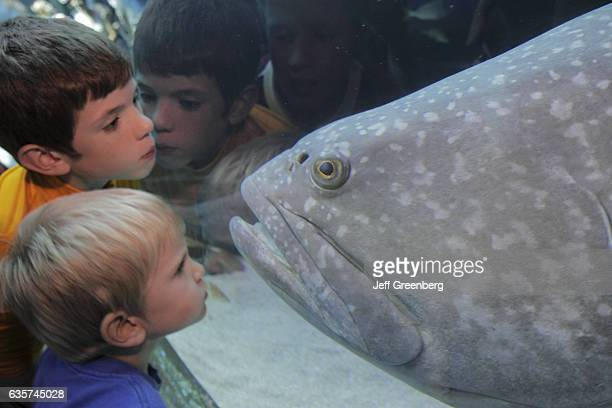 Two boys getting face to face with a Goliath Grouper