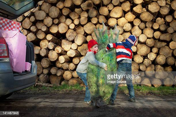 Two boys lifting Christmas tree to car