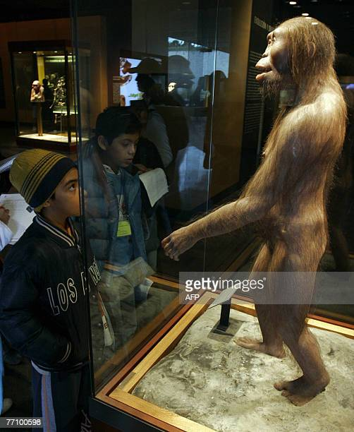Two boys look at a copy of the Australopithecus afarensis at the National Museum of Anthropology and History28 September 2007 in Mexico City...