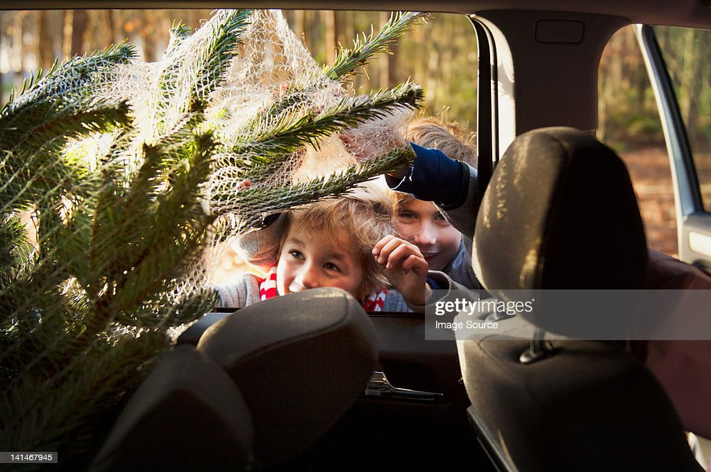 Two boys looking at Christmas tree in car : Stock Photo